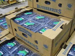 Fresh berries packed and ready to ship.
