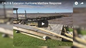 Storm Video