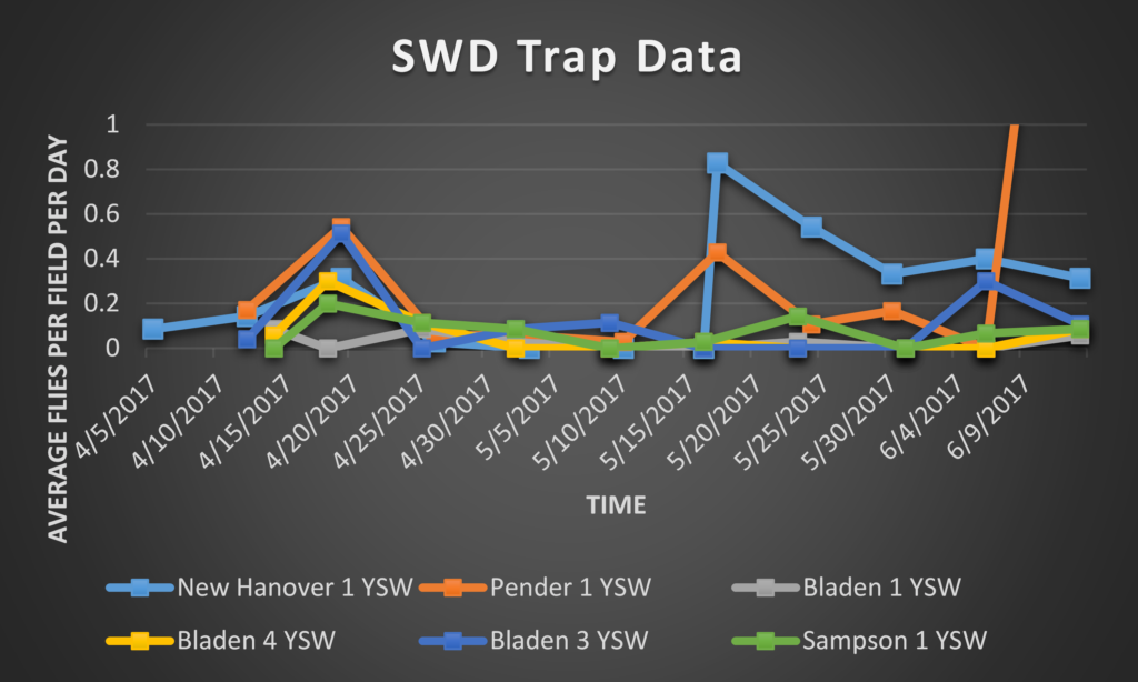 SWD trap data 6/16/17